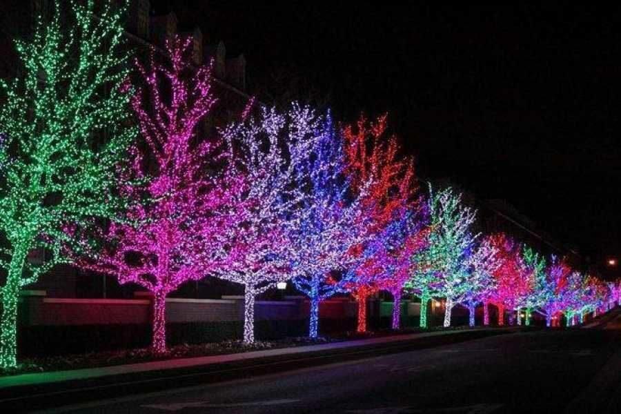 приготовление время гирлянды на деревья светодиодные фото искусство обработки бумаги